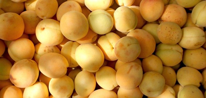 Apricots - The Armenite - Tatevik Vardanyan