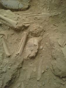 Teishebaini Urartu skeletal remains - Armen Martirosian - The Armenite